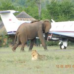 Bumi's welcoming committee at the airstrip