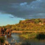 Victoria Falls Safari Lodge& where elephants are free to roam and action junkies are free to 'fall'.