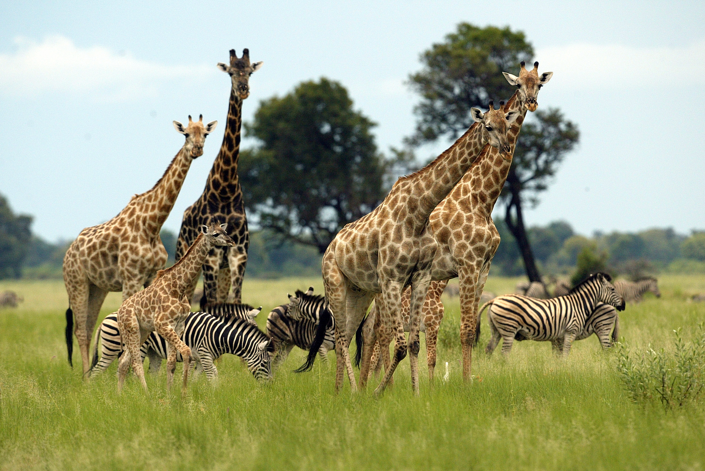 south african tourist arrivals to zimbabwe increase in 2013
