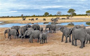 Elephant at the waterhole in Hwange National Park