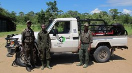 The NLCP works with local wildlife authorities to protect translocated rhinos at the North Luangwa Park. NLCP