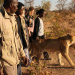 walking_with_lions3