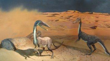 Syntarsus rhodesiensis, dinosaur in zimbabwe