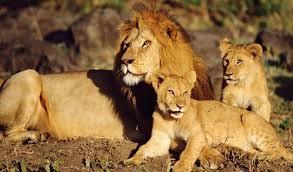 African Lion & Environmental Research Trust (ALERT