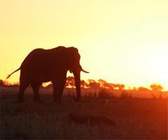 botswana ecotourism