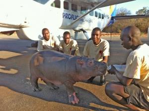 hippo proflight zambia