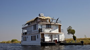 Pride of zambezi