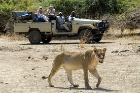 robin pope safaris