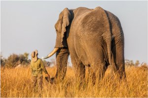 Doug adopted Jabu as a 2-year-old and has developed a strong bond with the big bull