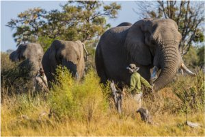 Doug takes Jabu's trunk in his hand and leads the trio into the bush to forage for food