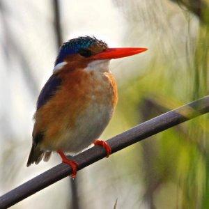 Sandibe Okavango Safari Lodge birdlife