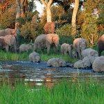 Where elephants roam