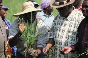 Kalimbeza rice project