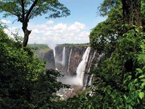 Lush vegetation growing along the Zambezi River below Victoria Falls, southern Africa
