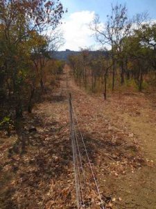 A wonderful benefit to building the fence is the creation of a firebreak.