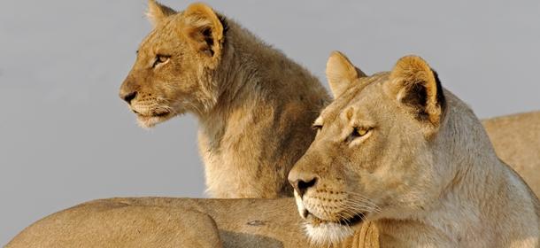Botswana Hunting ban