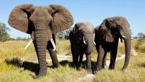 Botswana hunting