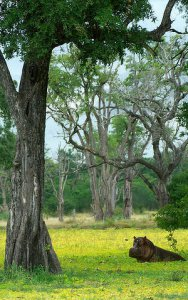 Hippos abound across the national park