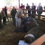 Rhino at Imire 1