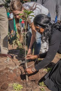 On Mandela Day, Greenpop's Director Lauren O'Donnell plants a Baobab Tree with the Zambian Minister of Tourism, Sylvia Masebo in celebration of Tata Madiba's rich and full life.