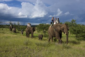 Elephant rides in Livingstone
