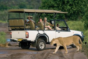 Chobe National Park Game Drive
