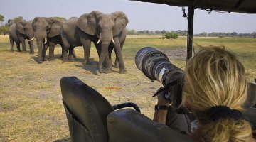 Close encounters - Wildlife can be readily caught by the eager snapper