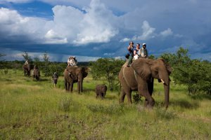 Elephant Safari - Zambia