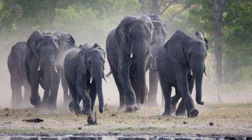 Elephants in Hwange National Park