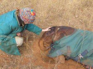 Rachael Murton strokes Nkala while he takes a morning nap