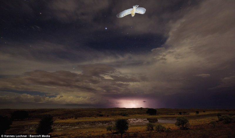 Serene - A single owl flew into a stunning night-time landscape of the Kalahari Desert, as lightning lit up the horizon