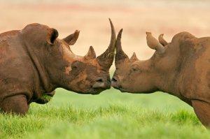 World Rhino Day 22nd September 2013