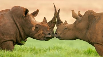 World Rhino Day 22nd September 2013