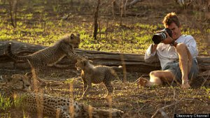 Kim Wolhuter filming his cheetahs up close