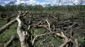 Deforestation in Zambia