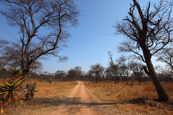 Dry season in the bush – Matobo Hills