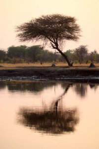 Early in Hwange Safari Park
