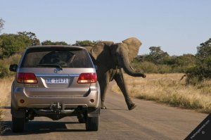 Foreigners driving through Zambia come up against an elephant