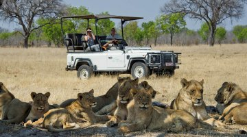 Spotting lions on a game drive through the Kafue National Park