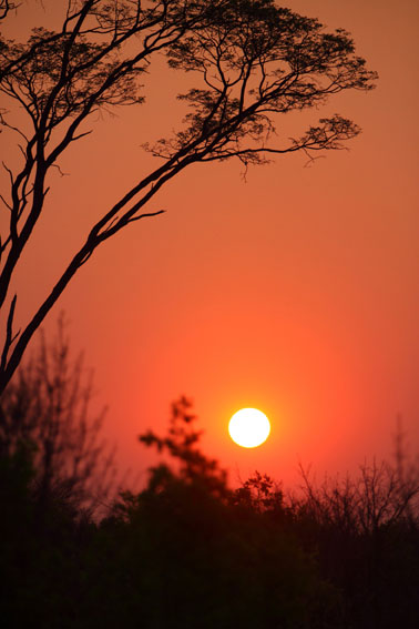 Sunset in Hwange Park