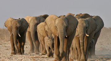 Wildlife is being introduced into the particular conservancies