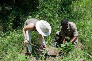 tokaleya tree planting