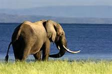 elephant at kariba
