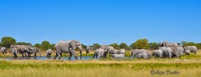etosha elephants 1