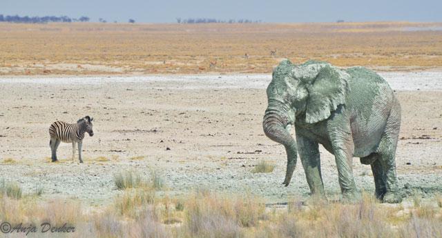 etosha elephants 3
