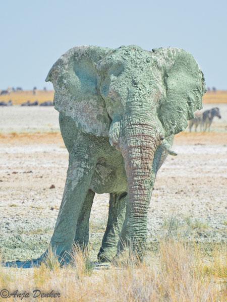 etosha elephants 4