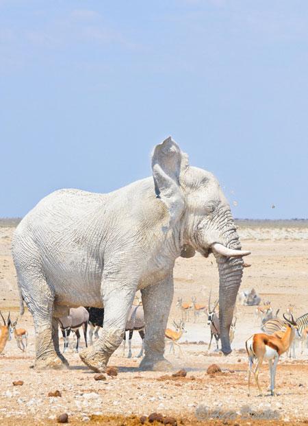 etosha elephants 6