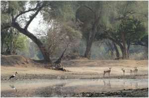 Magical early morning scene at Long Pool in Mana Pools