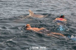 snorkeling-with-dolphins3