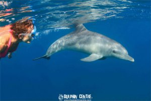 snorkeling-with-wild-dolphins4